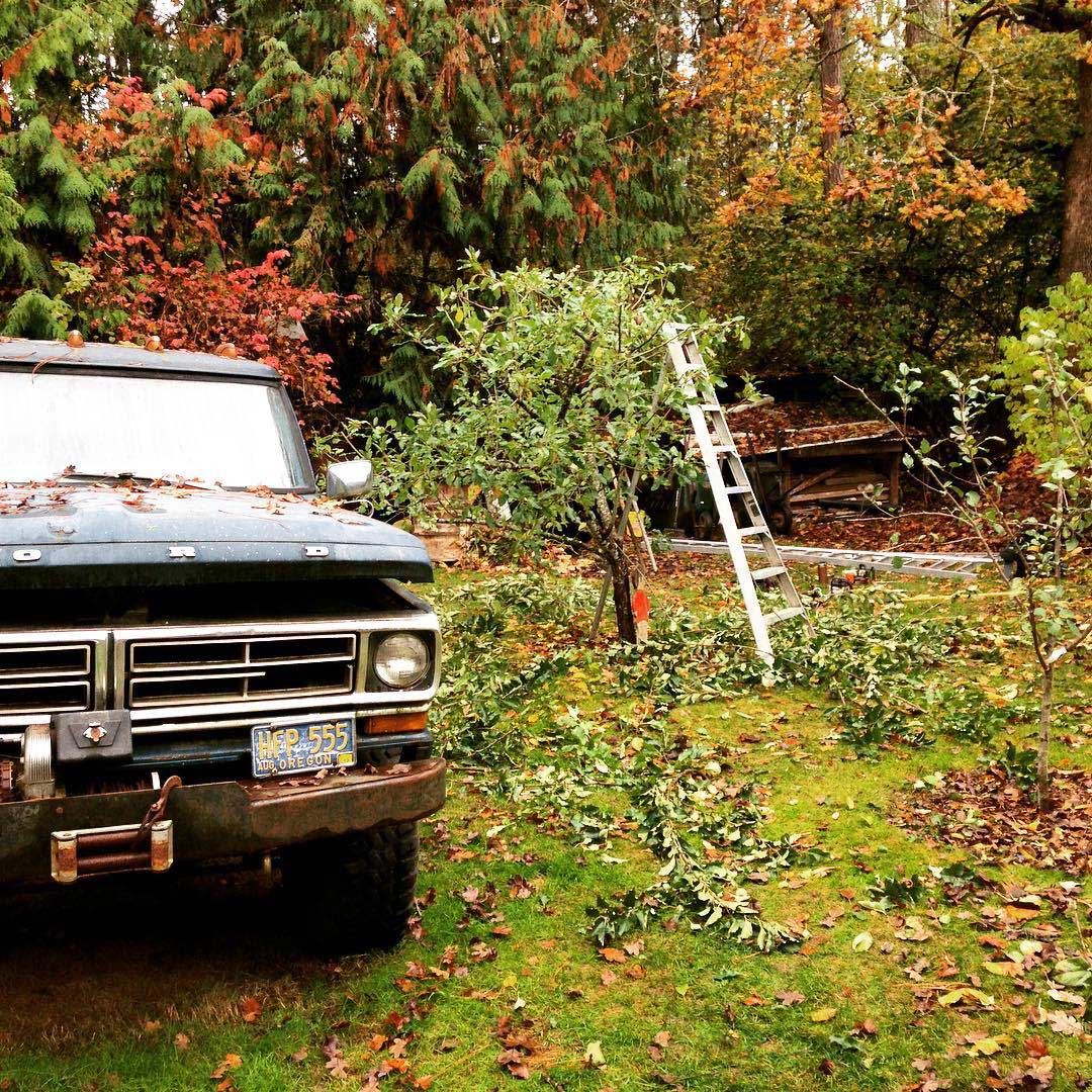 Eugene-Arborist-Fruit-Tree-Pruning
