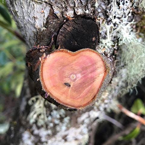 Eugene-Arborist-Pruning