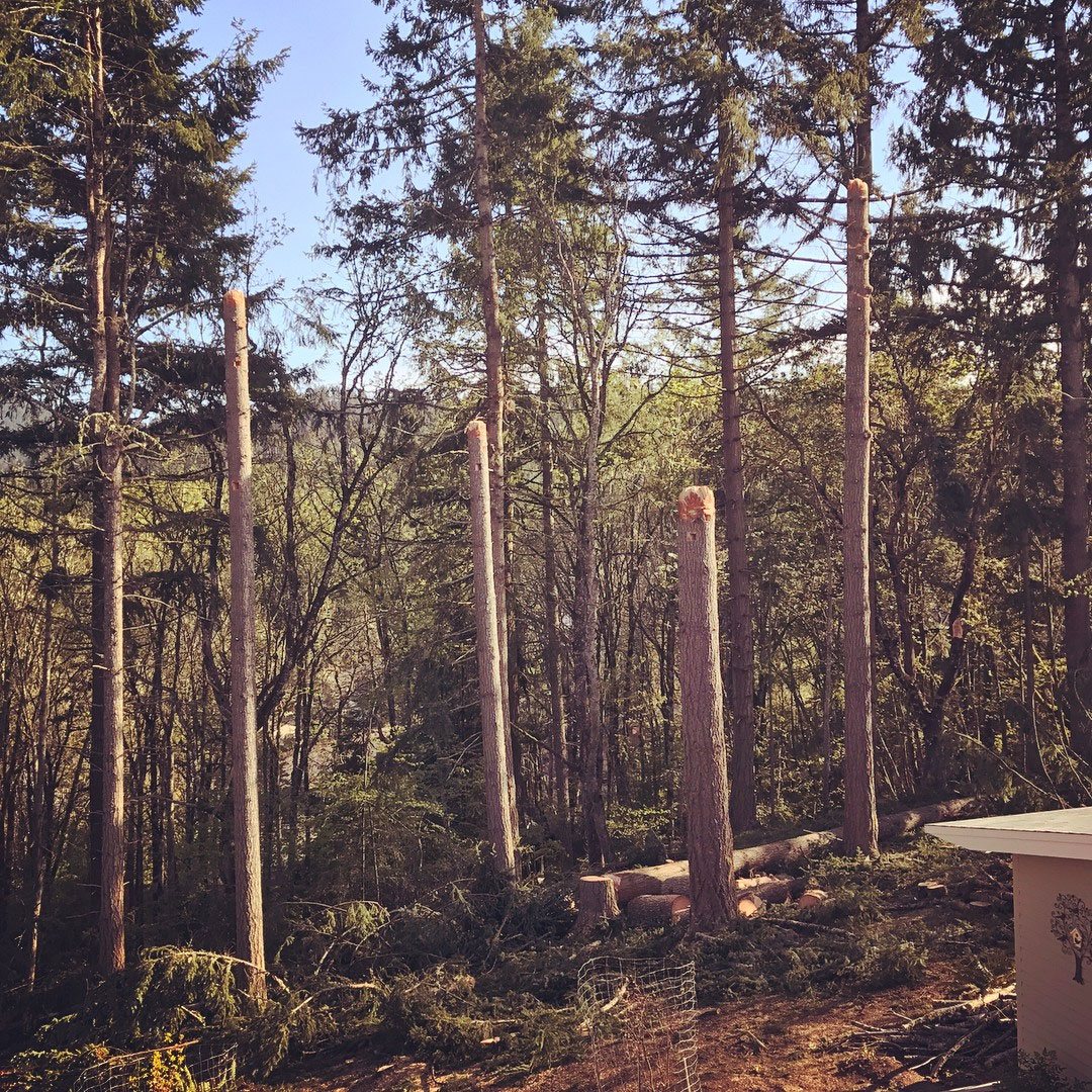 Eugene-Arborist-Sunlight-and-Vista-Pruning
