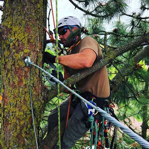 Eugene-Arborist-Tree-Preservation